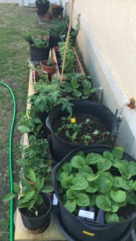 My garden set up